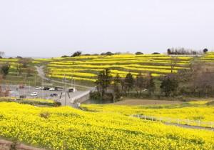 第12回 江口章子(あやこ)祭(平成27年3月29日)