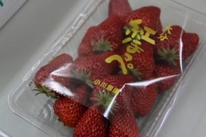 小川農園いちご狩り体験(平成27年3月8日~5月10日)